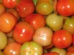 Tomato Prices Sadden Farmers
