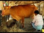 Tn Hikes Milk Procurement Price Rs 3 Consumers Spared