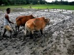 Banks Jittery As Deficient Monsoon Puts 8 Lakh Cr Farm Loan Risk