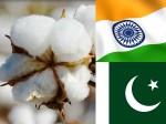 Pakistan Turns Largest Buyer Indian Cotton