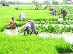First The Country Chief Minister Kcr Launched An Farmers Investment Support Scheme