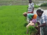 Parents Will Get 18000 Rupee For Sending Their Children To School Tdp New Scheme