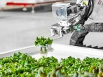 Robo Cultivated Vegetable Are Hitting American Market