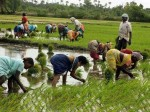 Monsoon Rains Decline 16 Percent Below Average Level Imd