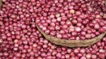 Onion Export Ban Will Stay Till February