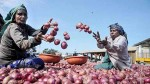 Onion Price May Fall Down Due To Onion Import
