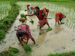Union Budget 2020 Pm Kisan Fund Allocation May Be Trimmed By 20 Percent
