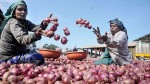 Onion Prices Rise 28 To Rs 2 500 Per Quintal After Export Ban Lifted