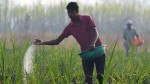 Trillion Subsidy Plan For Fertilizers New Dbt Scheme On Cards Budget