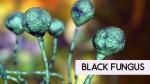 Everest Organics Shares Up 20 On Launching Posaconazole Api To Treat Black Fungus