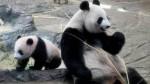 Tokyo Restaurants Shares Jump On Birth Of Twin Pandas In Ueno Zoo