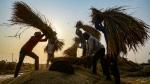 30 ஆண்டுகளுக்கு பின் இந்தியாவிடம் இருந்து அரிசி இறக்குமதி செய்ய சீனா முடிவு