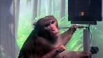 குரங்கு வீடியோவை வெளியிட்ட எலான் மஸ்க் நிறுவனம்.. இது சாதா குரங்கு இல்லீங்க..!