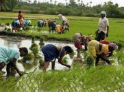 தென்மேற்குப் பருவமழை 16% பாதிப்பு : விதைச்சது முளைக்கலையே பதற்றத்தில் விவசாயிகள்