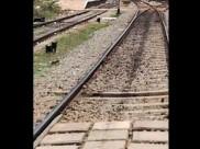 இலங்கையில் தமிழர் பகுதியில் 252.5 கி.மீ ரயில் பாதையை சீரமைக்கிறது இந்தியா