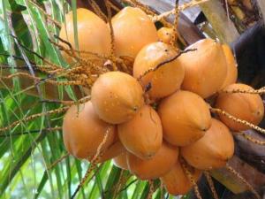 Dabur Launches R Al Activ Coconut Water