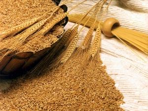 India Imports 12 000 T Australian Wheat