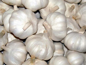 Garlic Prices Touch Rs 150 Kilo