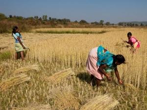 Us Nris Adopt 500 Villages India
