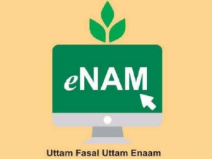 What Is Enam