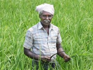 Is Narendra Modi S Crop Insurance Scheme Running Aground