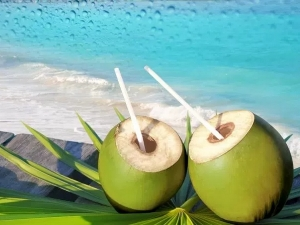 Tender Coconut Business Different Way Business With Simple Investment