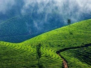 It S Raining Trouble Plantation Sector Kerala Karnataka