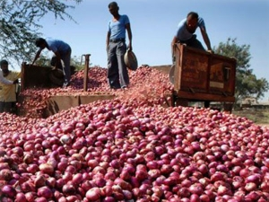 Kg Onion Sends Money Modi Protest