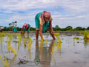 Budget 2019 Major Announcements On Agriculture Education