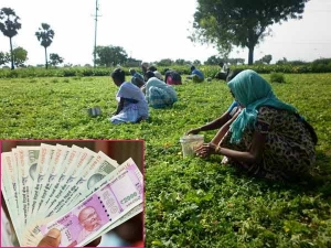 Modi Government Plans Transfer Cash Farmers Instead Subsidy
