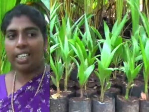 Woman Coconut Farmer Shares Her Success Story