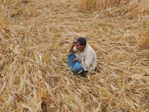 Madhya Pradesh Government Is Using Fake Borrowers Name Waive Farm Loan