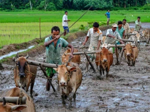India S Subsidies To Farmers Are Very Low
