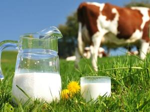 Hatsun Agro Introduce A New Hatsun Cow Milk
