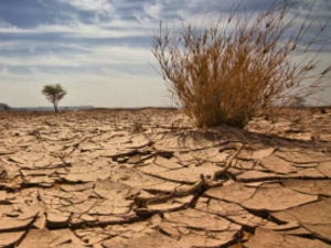 No Bank Loans For Drought Hit Farmers