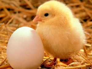 Today 21 11 2016 Egg Fish Meat Price Chennai