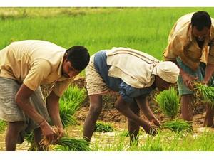 Crores Crops Loan Tamilnadu Budget