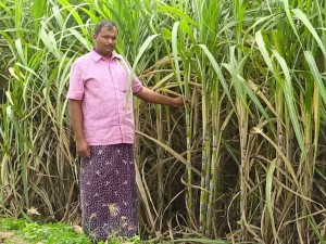 Cabinet Approves Financial Assistance Sugar Mills Clearing Cane Dues Of Farmers