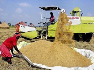 Cabinet Approves Hike Msp Paddy Rs 250 Per Quintal