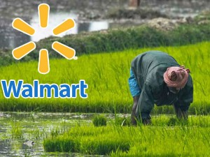 Walmart India Is Going Fund Indian Farmers 25 Million Dollars
