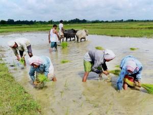 Under Pradhan Mantri Kisan Samman Nidhi Farmer Family Will Get 2000 Rupees Not An Individual Farmer
