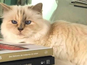 Choupette Is The Richest Cat In The World