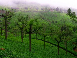 Are You Going To Purchase Plot In Coonoor