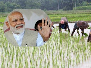 Agri Ministry Paid 1st Installment Of Pradhan Mantri Kisan Samman Nidhi To 3 10 Crore Farmers