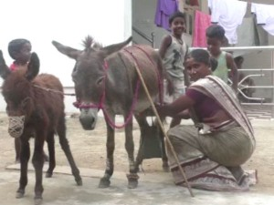 Ml Of Donkey Milk Sale For 50 Rupees In Sivagangai