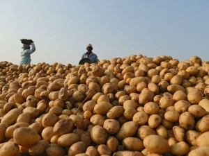 Pepsico Withdrawn Its Cases Against Gujarat Farmers In Fear Of Loosing Its Market