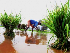 Around 12 000 Farmers Died Of Suicide In 3 Years In Maharashtra