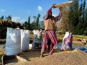 Economic Survey 2019 Food Grains Production 283 4millionn Tons Projected