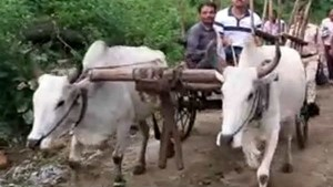 Uttarakhand Bullock Cart Owner Rs 1000 Fines By Police Under The New Motoe Vehicle Act