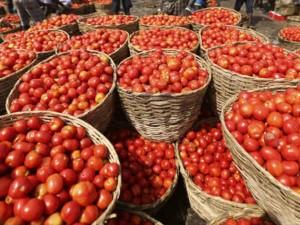 Jasmine Flower Price Shot Up 100 Percent Tomato Price Shot Up 50 Percent